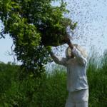 Święto Pszczelarzy