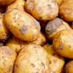 Ziemniaki z Egiptu<br> na cenzurowanym