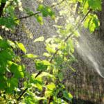 Zmiany w ustawie<br> o ochronie roślin