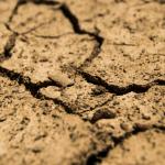 Szacowanie szkód spowodowanych suszą
