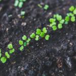 Nowe prawo zdrowia roślin – wyraź swoją opinię