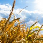 Decyzje Rady Ministrów<br> w sprawie przewagi kontraktowej i suszy