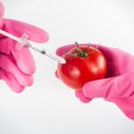 GMO – z czym to się je?