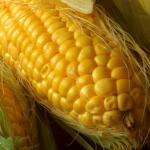 Kontrola upraw<br> na obecność GMO