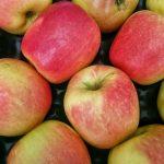 Kolumbia – kolejny<br> rynek dla polskich<br> jabłek już otwarty