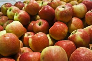 jablko piorin eksport (1)