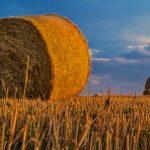 ARiMR przekazała rolnikom 4 mld złotych