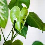 Informacja<br> dla amatorów ogrodników – nowe prawo zdrowia roślin