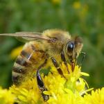 Uczmy się od pszczół
