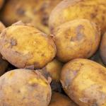 Eksport ziemniaków<br> z Polski do państw<br> członkowskich UE